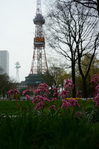 札幌テレビ塔と・・・
