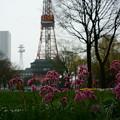 写真: 札幌テレビ塔と・・・