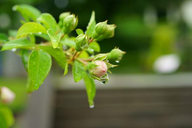Photos: 雨の日・・・