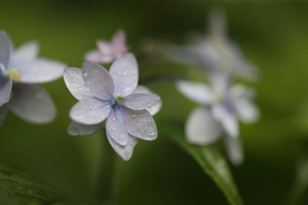 写真: 雨と・・・