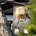 Photos: 菊泉!!