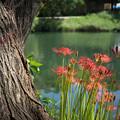 池のほとり・・・