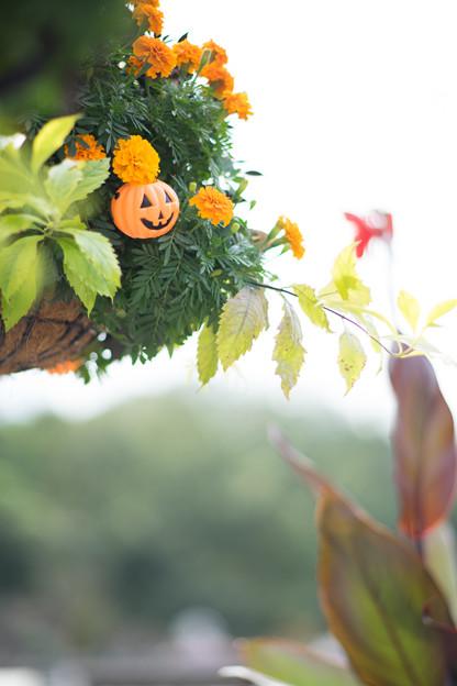昼間のハロウィン!!