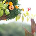 写真: 昼間のハロウィン!!