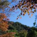紅葉と緑と・・・