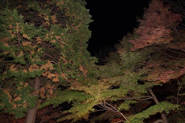 木々のライトアップ