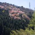 山の美しい木々