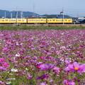 写真: 三岐鉄道 270系 K71