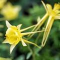 写真: yellow #3