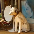 忠犬ニッパー