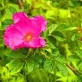 ふるさとの花