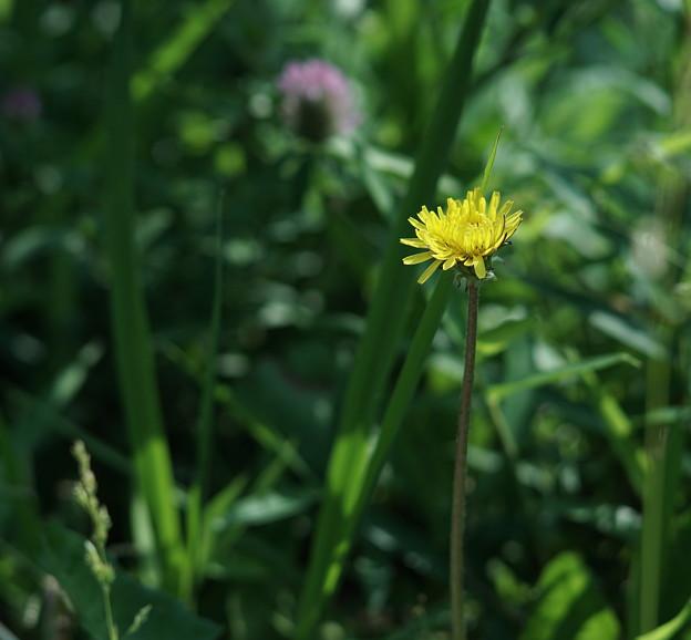 写真: 日だまりの花