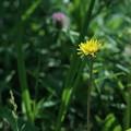 日だまりの花