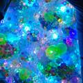 写真: アスナル金山のクリスマスイルミネーション 2015 No - 19