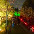 写真: 東山動植物園 紅葉ライトアップ 2015 No - 78