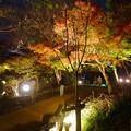 写真: 東山動植物園 紅葉ライトアップ 2015 No - 79