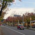 Photos: 街路樹が赤く染まってた、秋の星が丘テラス - 3