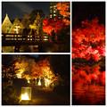 写真: 白鳥庭園の紅葉ライトアップ 2015(まとめ)No - 2