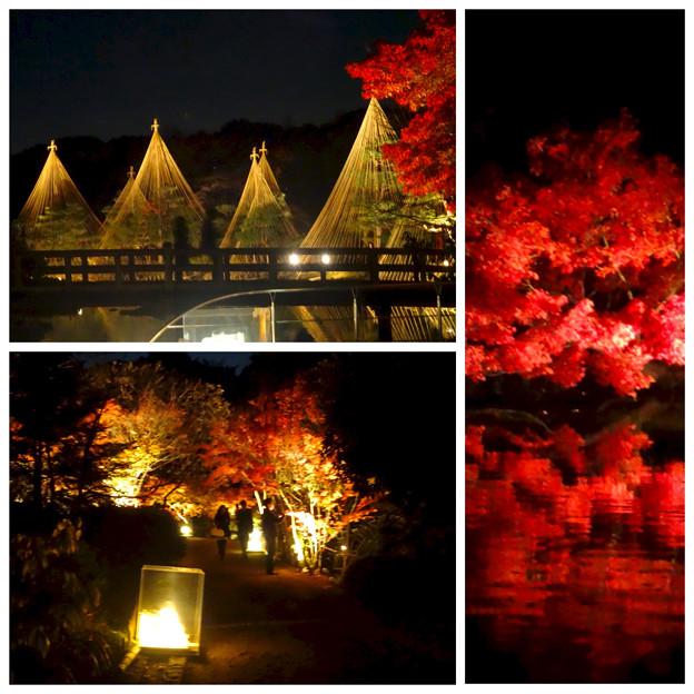 写真: 白鳥庭園の紅葉ライトアップ 2015(まとめ)No - 3