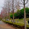 写真: 大高緑地公園 No - 12:紅葉した並木