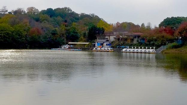 大高緑地公園 No - 42:池の反対側から見たボート乗り場とスワンボート