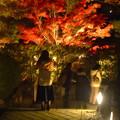 写真: 白鳥庭園「紅葉ライトアップ 2015」No - 74