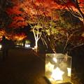 写真: 白鳥庭園「紅葉ライトアップ 2015」No - 77:紅葉と、星型の美濃和紙あかりアート