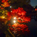 写真: 白鳥庭園「紅葉ライトアップ 2015」No - 97