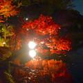 写真: 白鳥庭園「紅葉ライトアップ 2015」No - 100