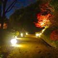 写真: 白鳥庭園「紅葉ライトアップ 2015」No - 104