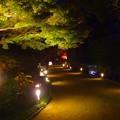 白鳥庭園「紅葉ライトアップ 2015」No - 216:美濃和紙あかりアートで照らされた道
