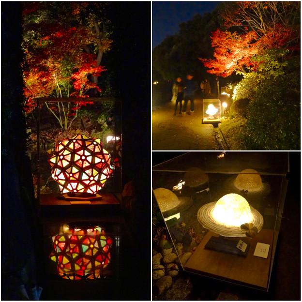 写真: 白鳥庭園 紅葉ライトアップ 2015:紅葉に彩りを添える、個性的な様々な美濃和紙あかりアートの作品 - 8