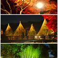 白鳥庭園「紅葉ライトアップ 2015」No - 226:紅葉、雪吊り、竹林