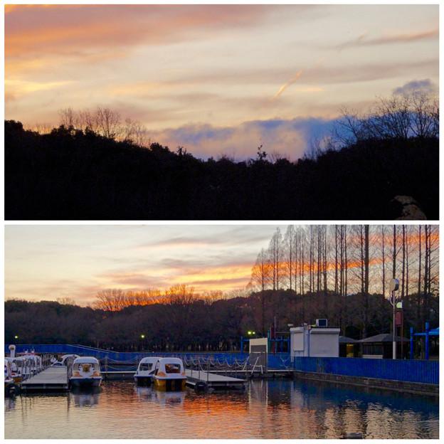 庄内緑地公園:夕暮れ時のボート池周辺の景色 - 13
