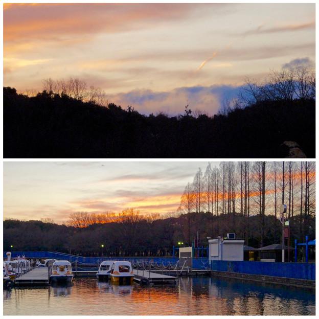 庄内緑地公園:夕暮れ時のボート池周辺の景色 - 14