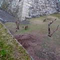 写真: 名古屋城天守閣 お堀の鹿 - 3