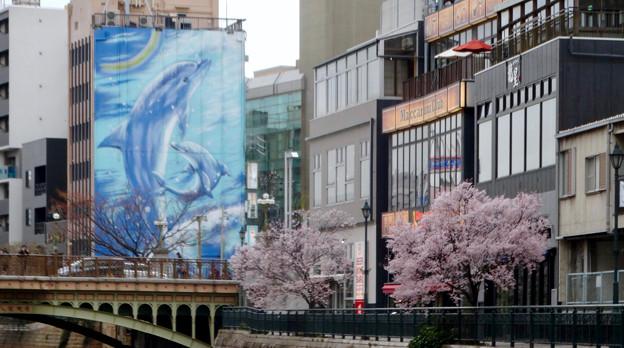 すでに満開&葉桜だった納屋橋近くの堀川沿いの桜(四季桜、2018年3月18日) - 10
