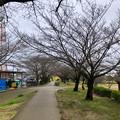 名古屋では開花宣言されたけど、ようやくピンク色が見え始めたくらいだった落合公園のソメイヨシノ(2018年3月20日) - 4