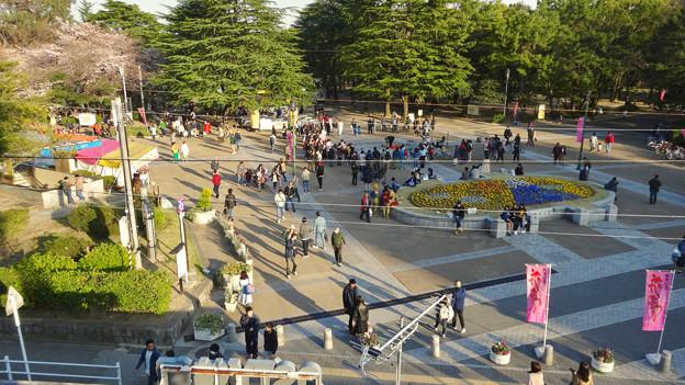 たくさんの人で賑わってた、桜咲く鶴舞公園(2018年3月24日) - 1