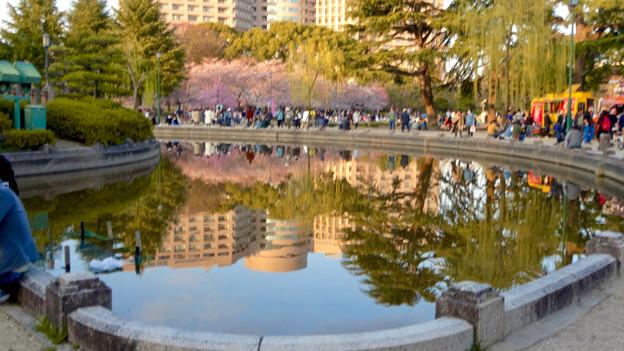 たくさんの人で賑わってた、桜咲く鶴舞公園(2018年3月24日) - 25