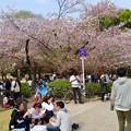 Photos: ものすごく沢山の花見客がいた鶴舞公園(2018年4月1日) - 16