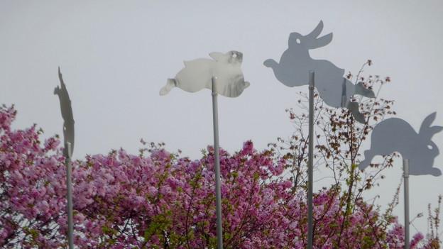 東山動植物園:花畑 - 6(ウサギの装飾)