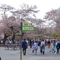 Photos: 東山動植物園の桜(2018年4月1日)No - 26