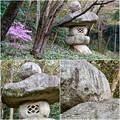 写真: 東山動植物園:パンプキン顔(ジャック・オー・ランタン)が浮かび上がって見えた中国庭園の石灯籠 - 13