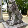 写真: 挙母神社 No - 57:ユーモラスな狛犬