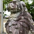 写真: 挙母神社 No - 58:ユーモラスな狛犬