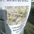 写真: 外来植物「メリケントキンソウ」の拡大に注意を促す張り紙 - 3