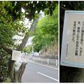 Photos: 桶狭間古戦場 - 38:駒(馬)つなぎのねず