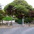 Photos: 高徳院 No - 18:今川義元本陣跡