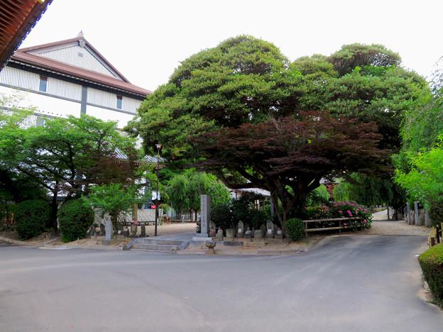 高徳院 No - 49:今川義元本陣跡